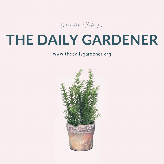The Daily Gardener Podcast Album Cover