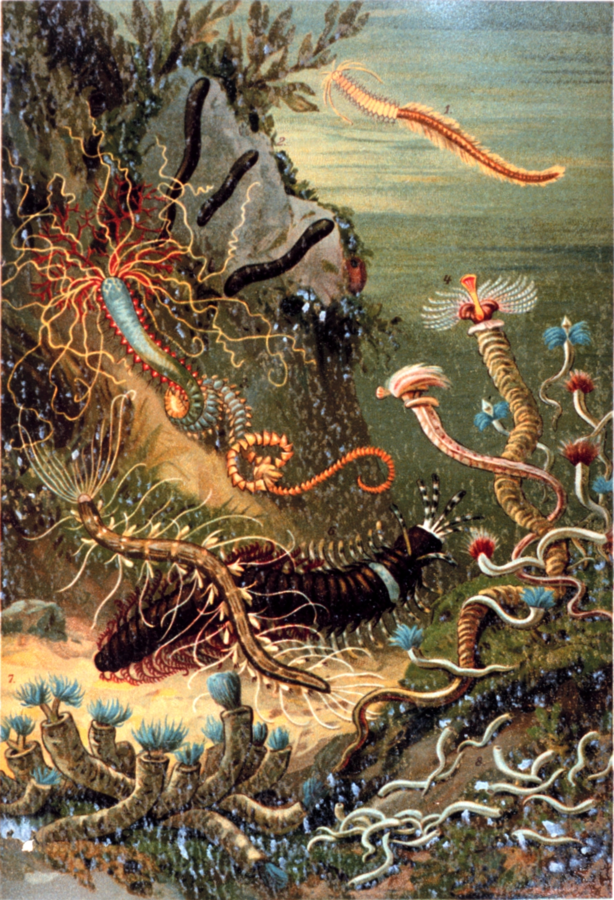 A variety of marine worms