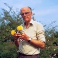 "#OTD in 2003 Horticulturist Graham Stuart Thomas (Books By This Author) died. He was 94. (3 April 1909 – 17 April 2003). GST was fundamentally a nursery man and he lived a life fully immersed in the garden. His passion was sparked at a young age by a special birthday present he was given when he turned six: a beautiful potted fuchsia. In 2003. his gardening outfit - including his pants, vest and shoes - as well as a variety of his tools (including plant markers and a watering can) were donated to the Garden Museum. GST was best known for his work with garden roses and his leadership of over 100 National Trust gardens. He wrote 19 books on gardening. Ever the purposeful perfectionist, he never wasted a moment. What do folks have to say about GST on social media? Here's a sampling: Pachysandra ground cover - A GST classic! My mom gave me a Graham Stuart Thomas for my first gardening book, so very special Our best selling plant of 2015? At number 1 (drum roll) - Eryngium Graham Stuart Thomas. Flower spike on yucca in border. GST used them as punctuation marks in design. Love being married to someone who knows what I mean when I say, ""Bring me Graham Stuart Thomas"""
