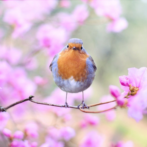 How Wonderful is the Advent of the Spring