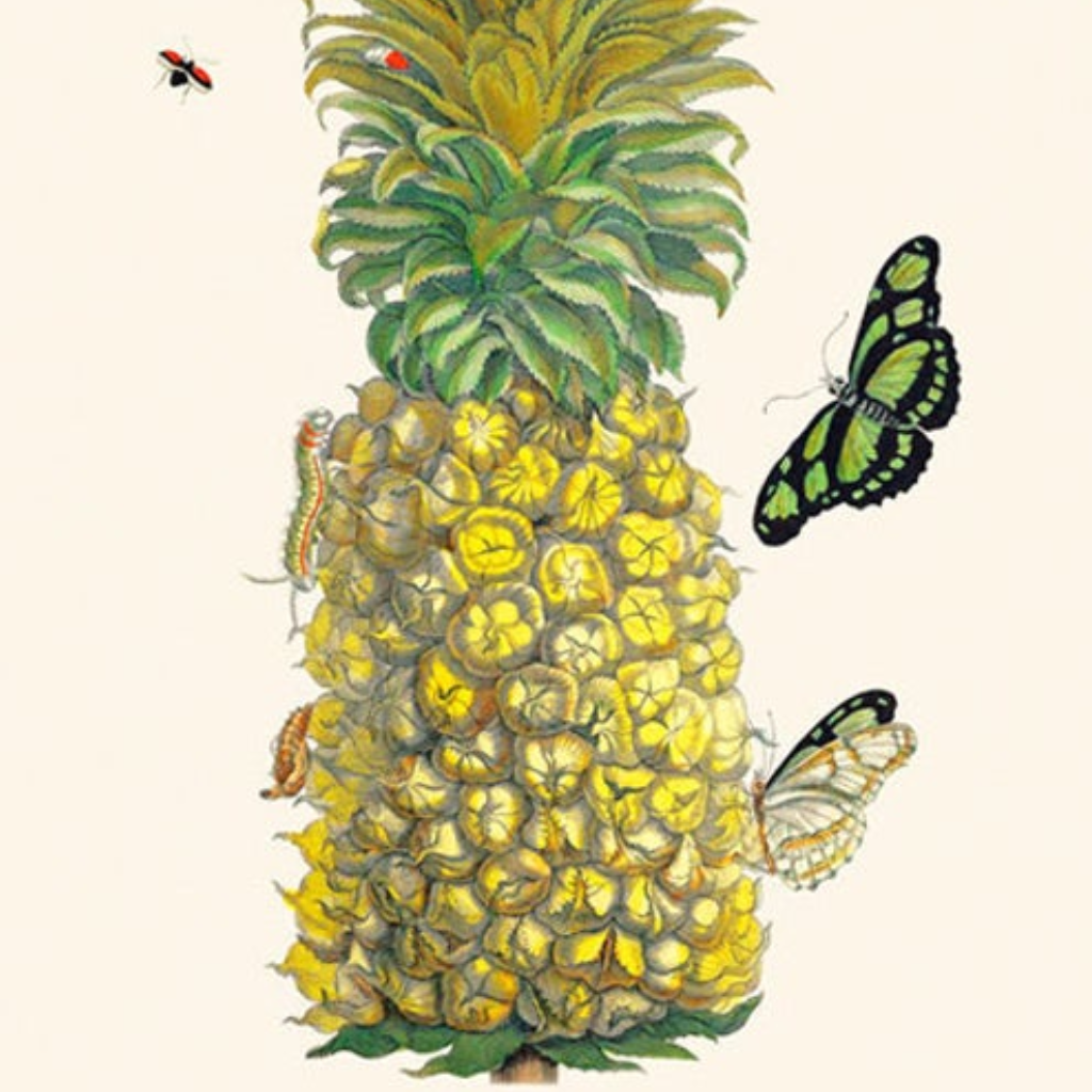 Merian's Pineapple and Butterfly