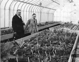Henry Teuscher in Greenhouse