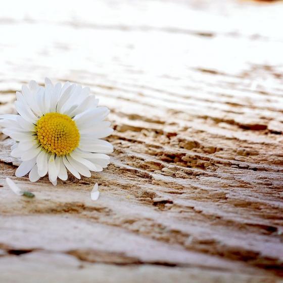 He Fell Forward Like a Cut Flower