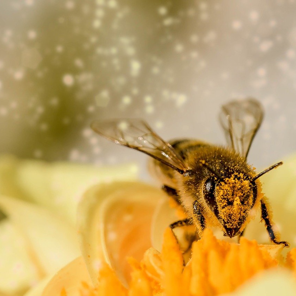 Where Sucks the Bee Now