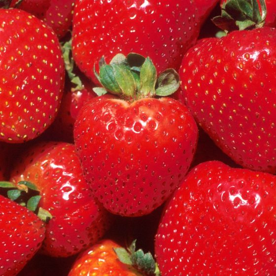 Strawberries in November