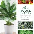 Houseplants by Lisa Steinkopf