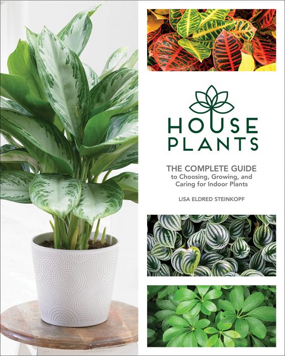 Houseplants by Lisa Steinkopf