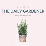 20200101 The Daily Gardener Album Cover