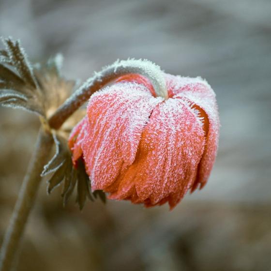 Flowers in Winter