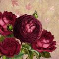Friendship is Like a Rose
