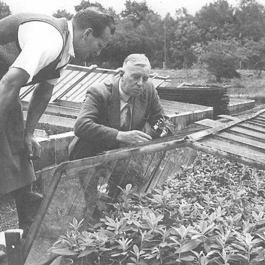 Harold Hillier with his propagator Vic Polovsky
