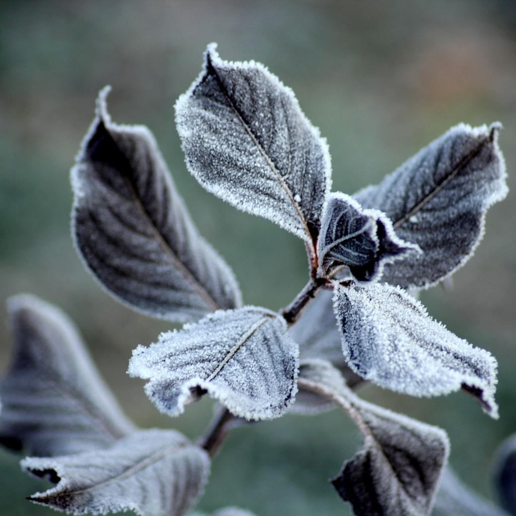 Nature Looks Dead in Winter