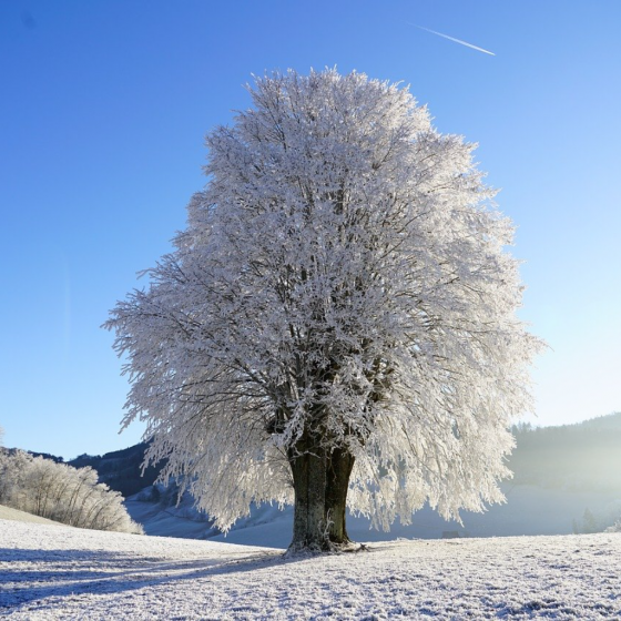 Of Winter's Lifeless World Each Tree