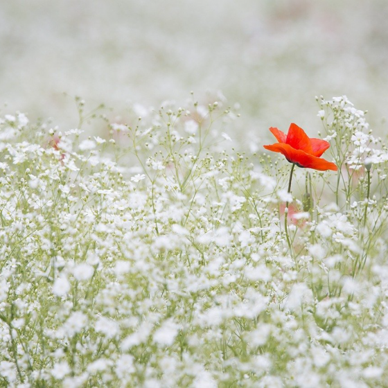 The Gaudy Flower Poem