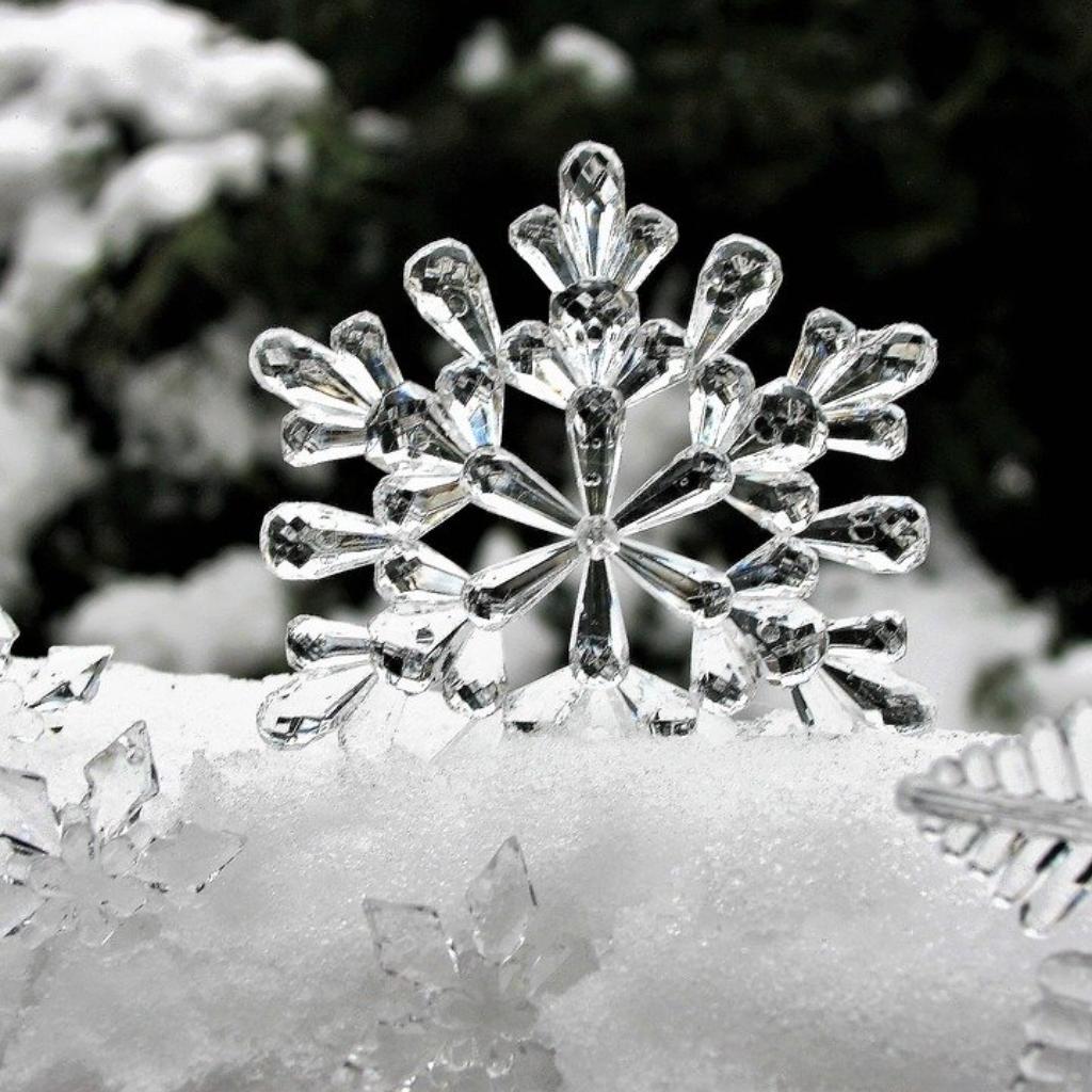 Here Delicate Snow-Stars