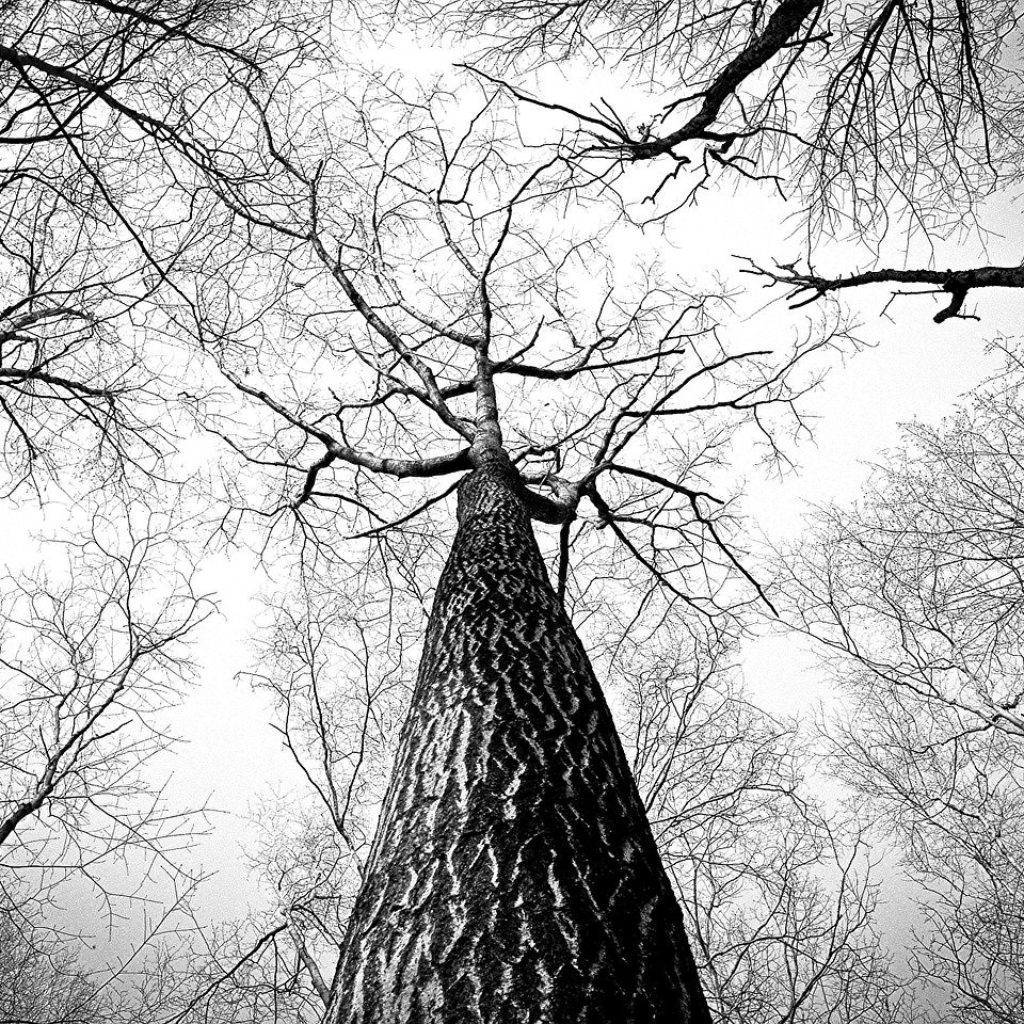 The Motionless Branches of Some Trees