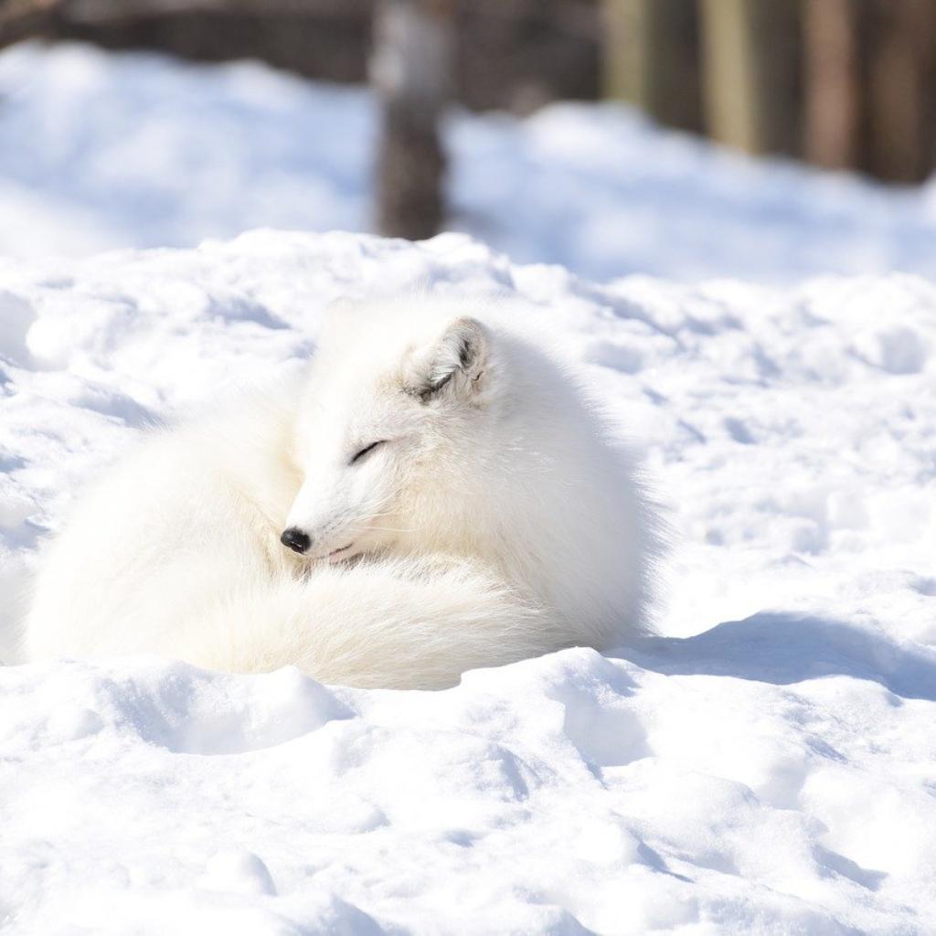 Winter Means a Long Sleep