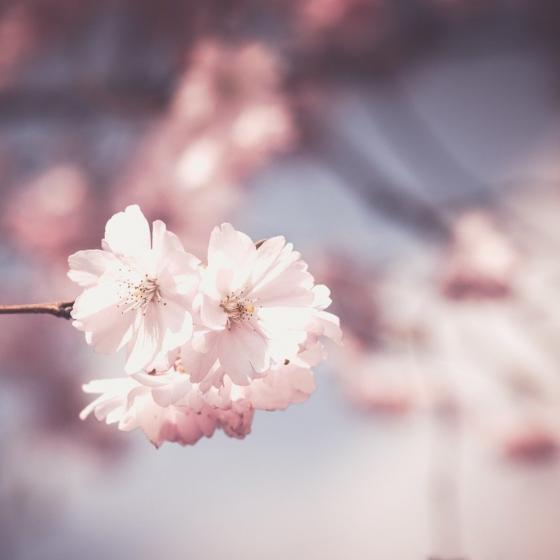 A Pale Haze of Spring