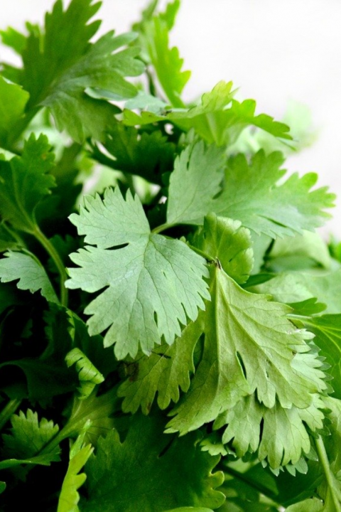 Parsley 7