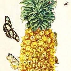 A Pineapple and Butterfly