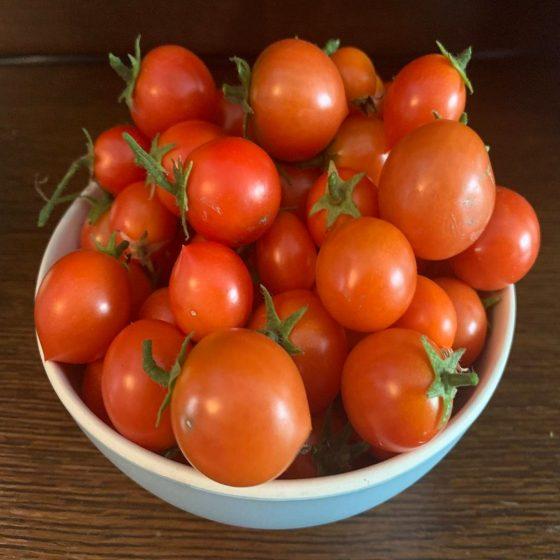 Good Tomato