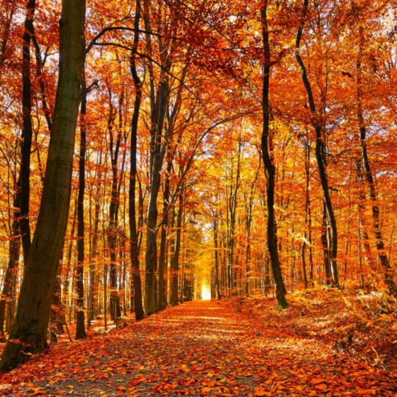 Summer is Better but the Best is Autumn