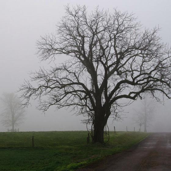 All in November's Soaking Mist
