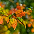 Advancing Autumn