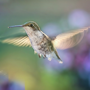 A Hummingbird is a Feathered Prism
