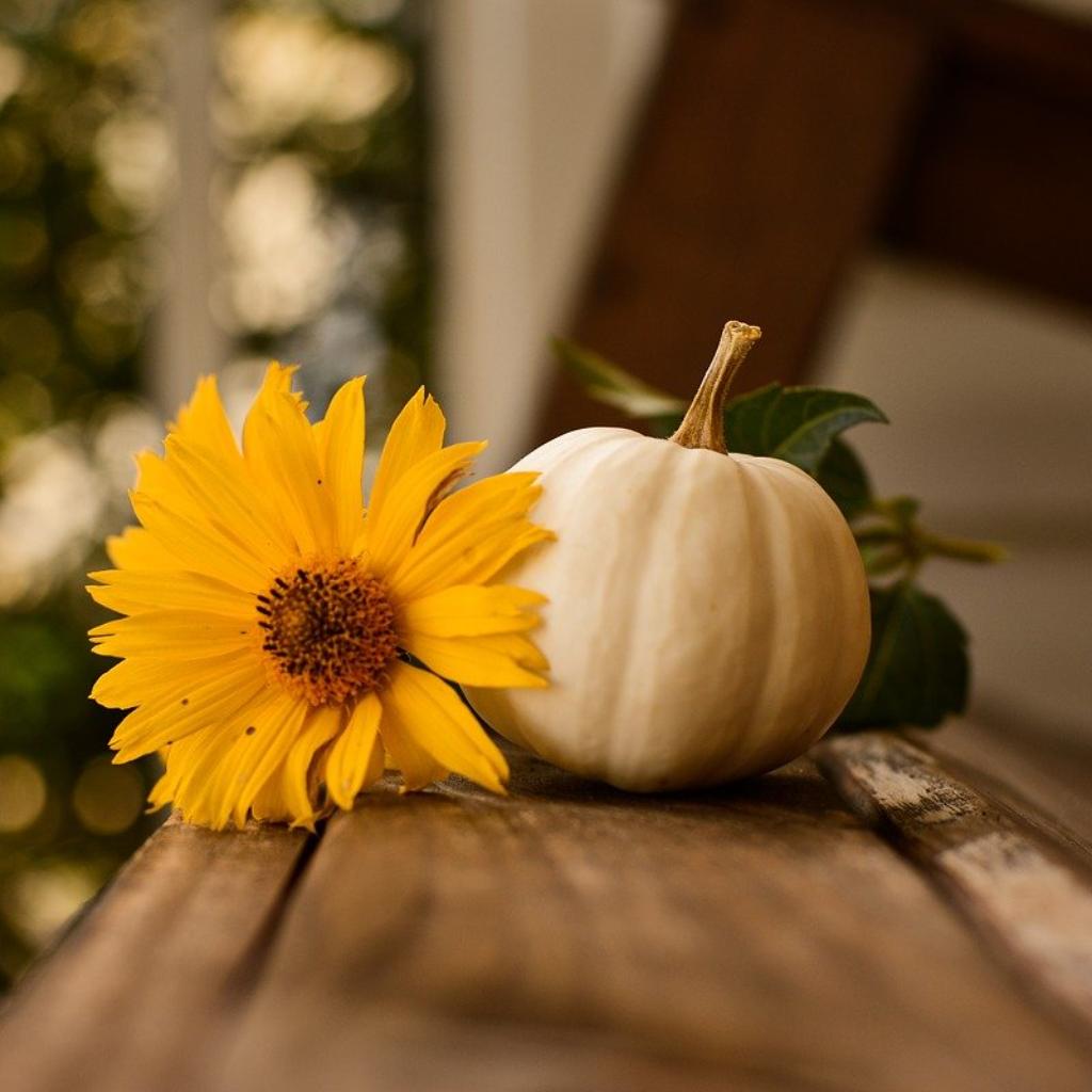 Thanksgving Flower