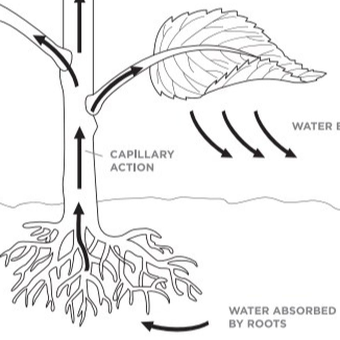 Law of Capillary Attraction