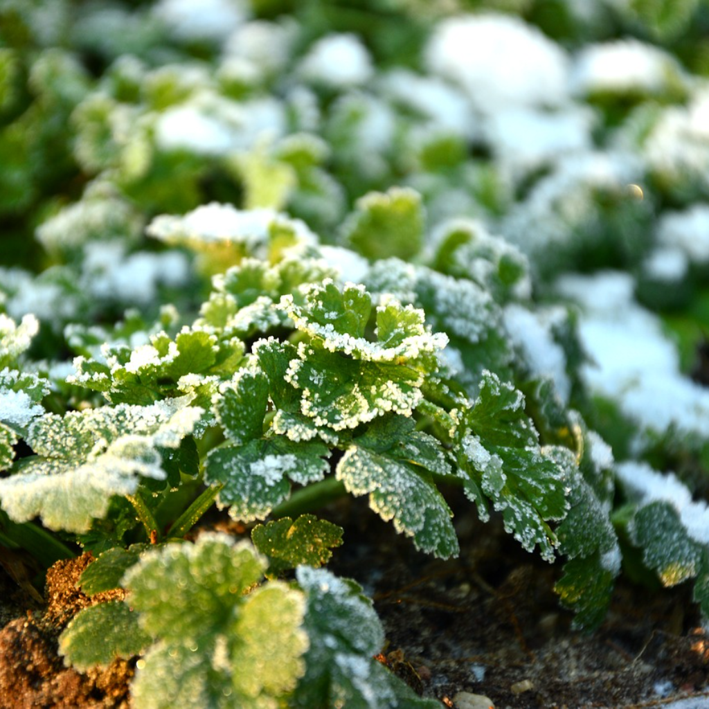 Most Weeds Don't Make it Through Winter