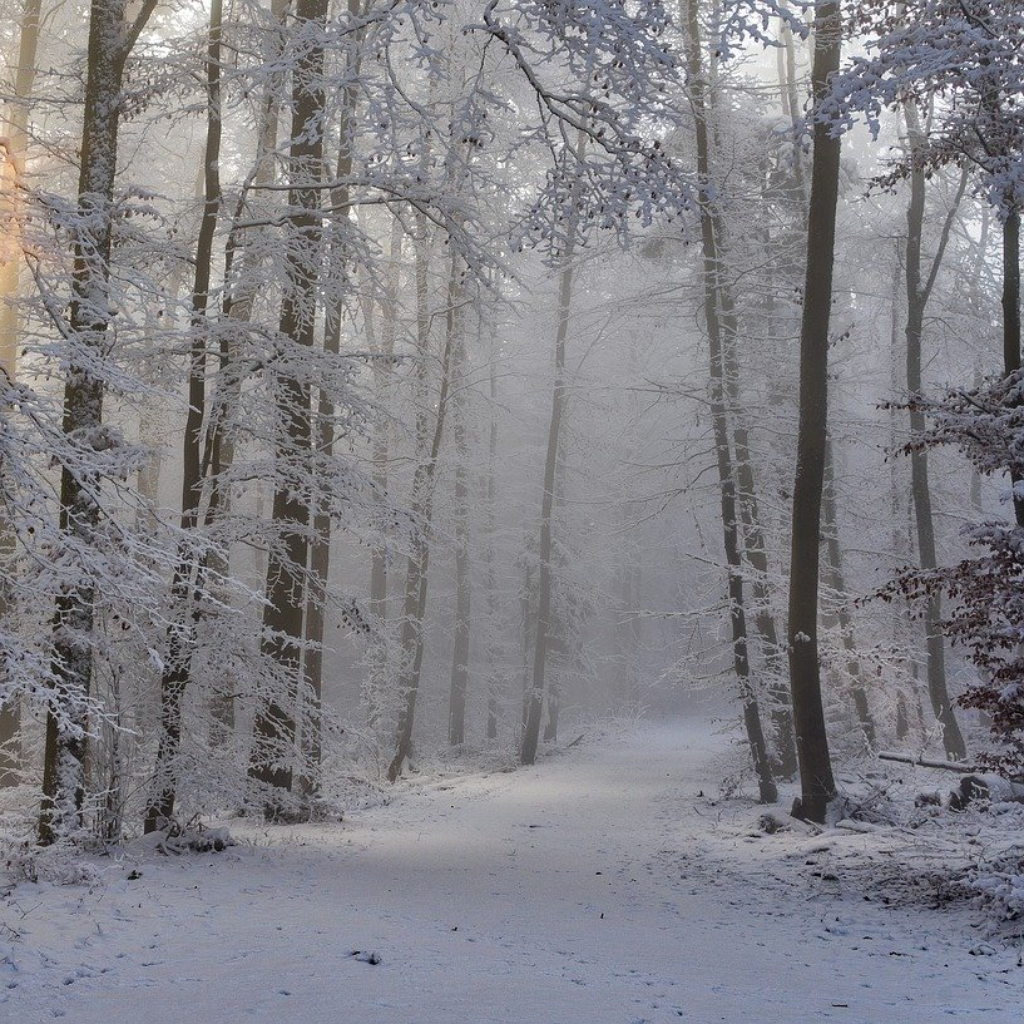 The Way That Leads To Winter