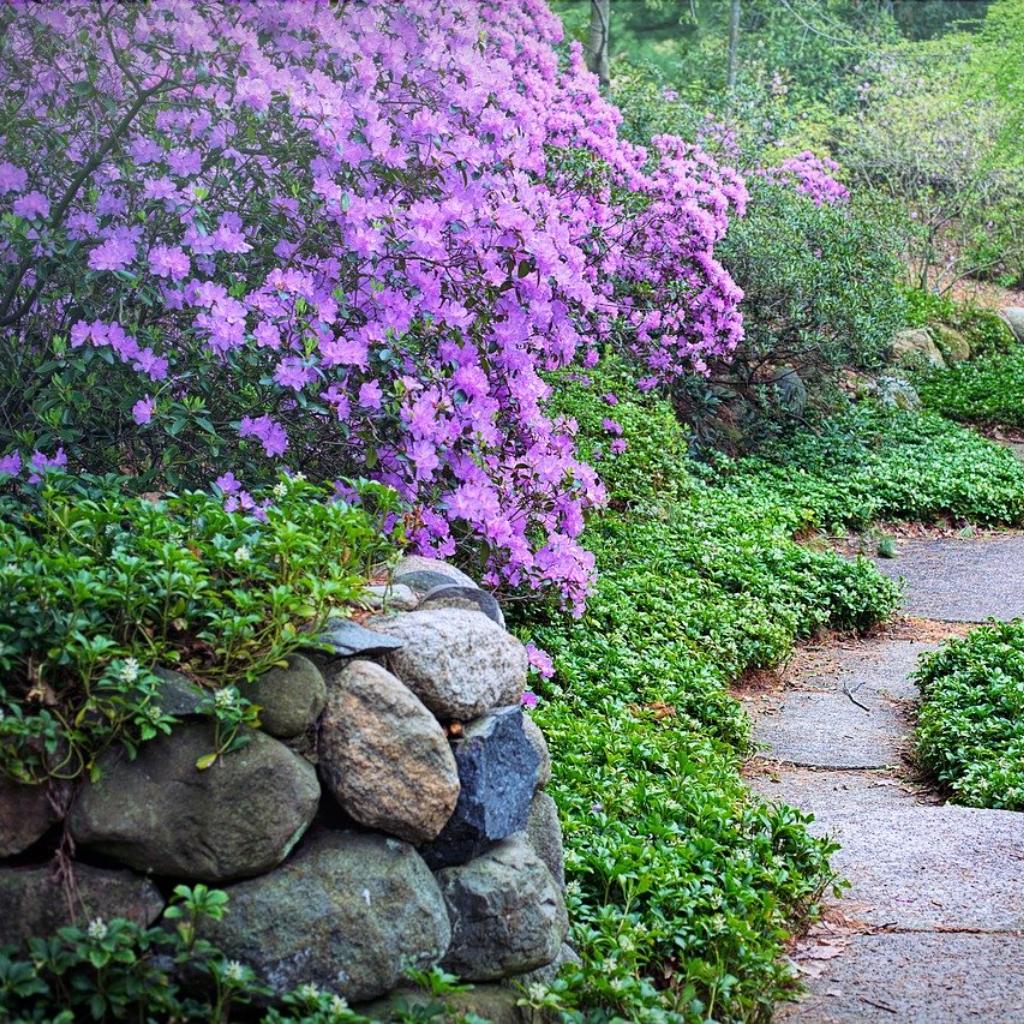 Through Springtime Walks