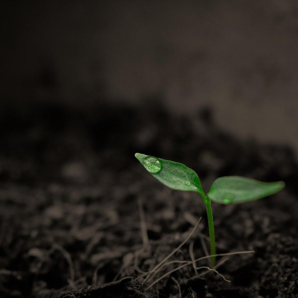 A Sense of the Soil