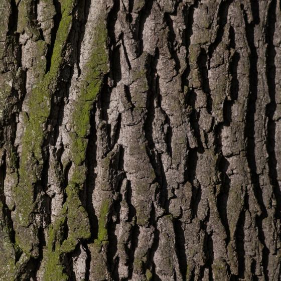 Bark and pH