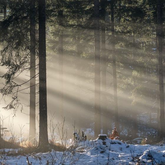 Gratitude for Light
