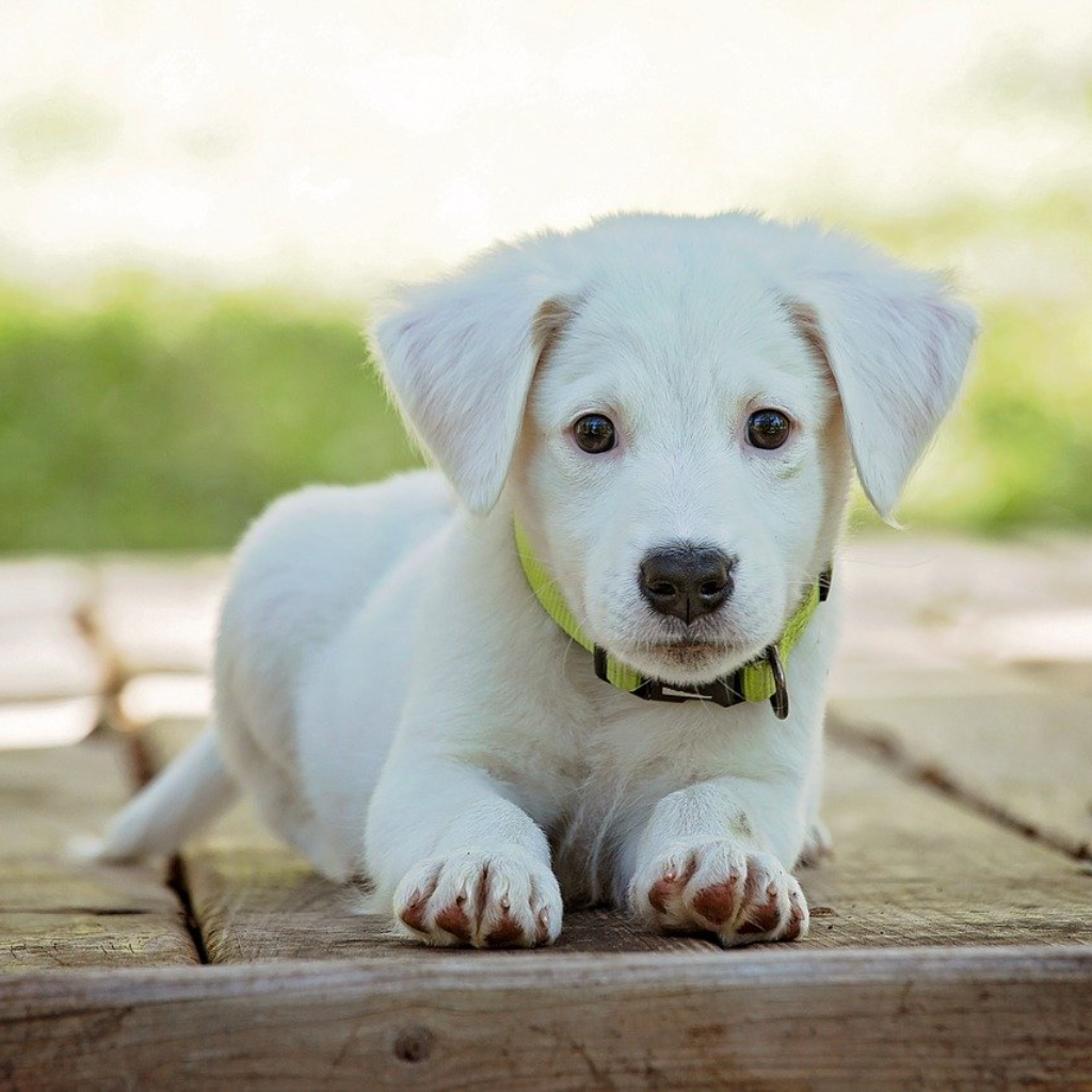 Puppy-Proofing Gardening Illustrated
