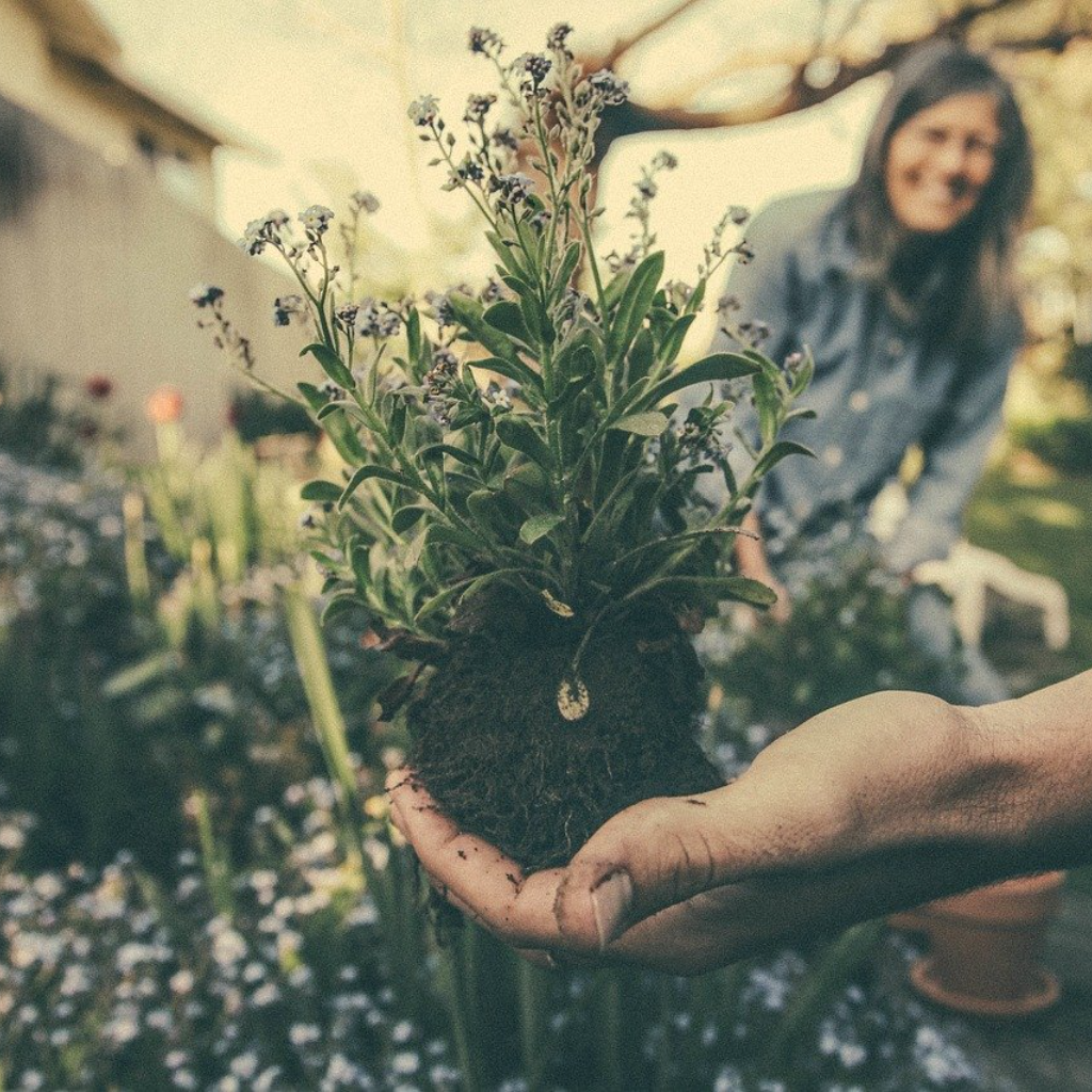 The Absolutely Right Way to Start a Garden