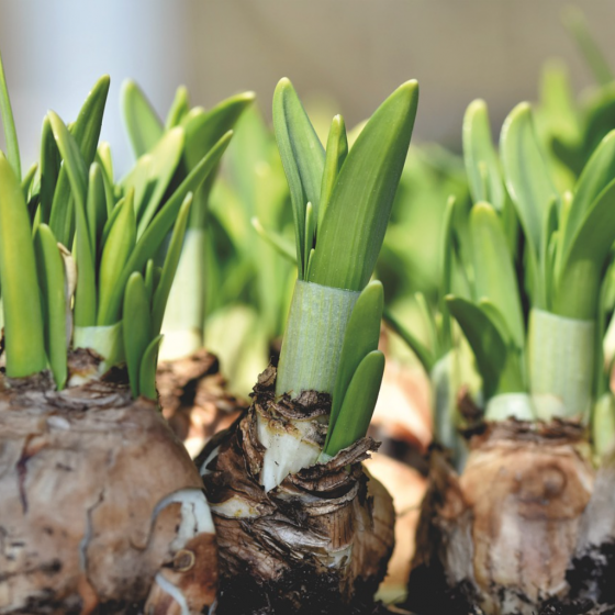 The Beauty of Spring Bulbs