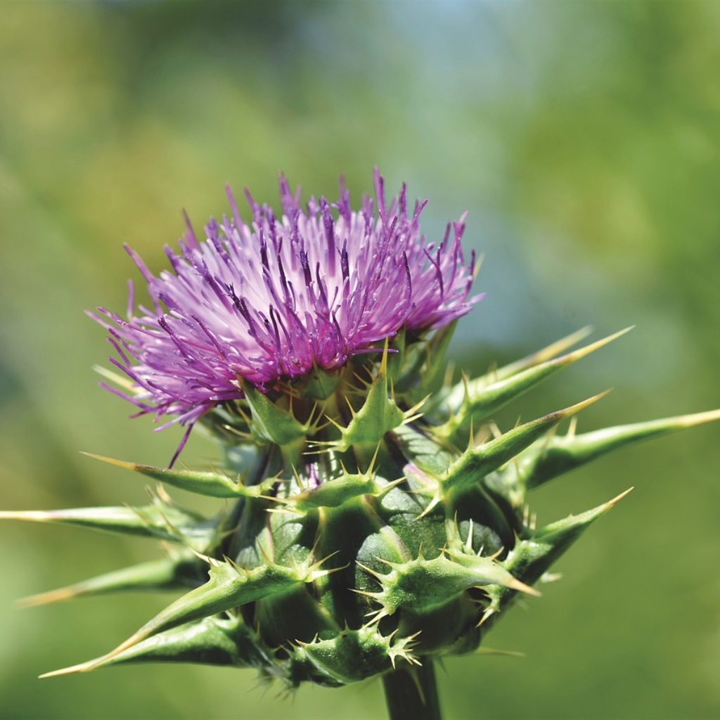 The Order of the Thistle