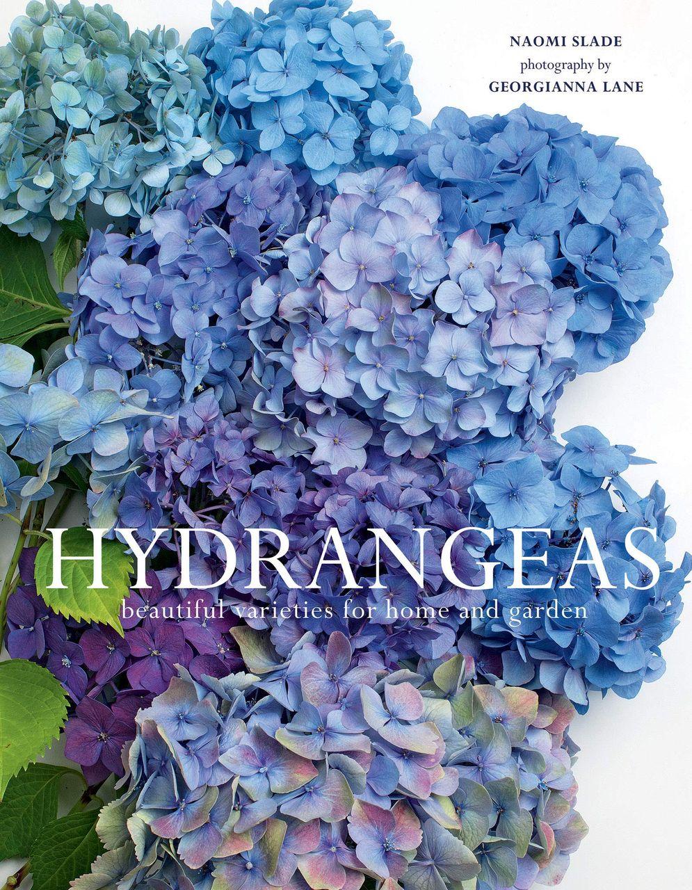 Hydrangeas by Naomi Slade