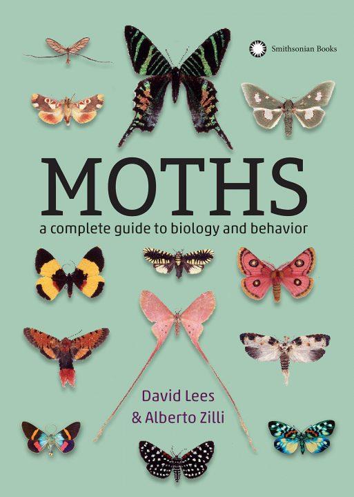 Moths by David Lees and Alberto Zilli