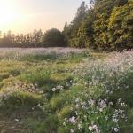 June Meadow