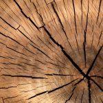 Old Tree Slab