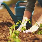 The Design a Gardener Imposes