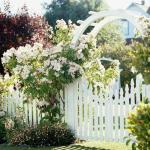 Why Gardens are Increasingly Precious