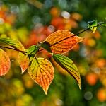 Advancing Autumn